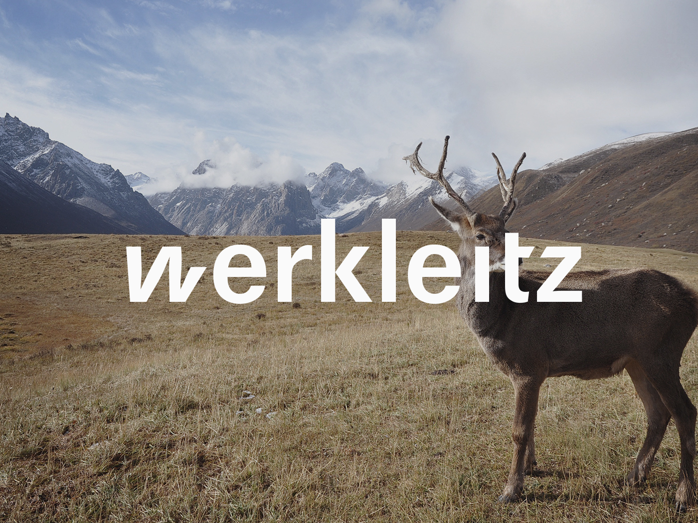 Werkleitz | Corporate Identity